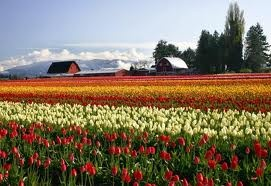 If you go to the Skagit Tulip Festival, consider adding a short hike on the local segment of the Pacific Northwest Trail along the Padilla Bay Shore Trail.