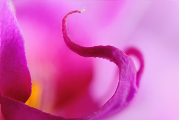 Photograph Orchid elephant by Martin Čapek on 500px
