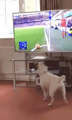 Playing Ball #Autos #Beauty #Books #Funny #Finance #Food #Games #Health #News #Pets #Sport #Soccer #Travel #FunnyGifs #Entertainment #Fashion #Quotes #Animals #Insurance #CarInsurance #Autoinsurancecompaniesquotes #Insurancequotesautoonline #Onlinequotesforautoinsurance #Bestautoinsurancequotes #Automotiveinsurancequote #Affordableautoinsurancequotes #Buyautoinsurance #Getautoinsurance #Automobilequotes #Onlinequoteautoinsurance http://unirazzi.com/ppost/563724078345403792/