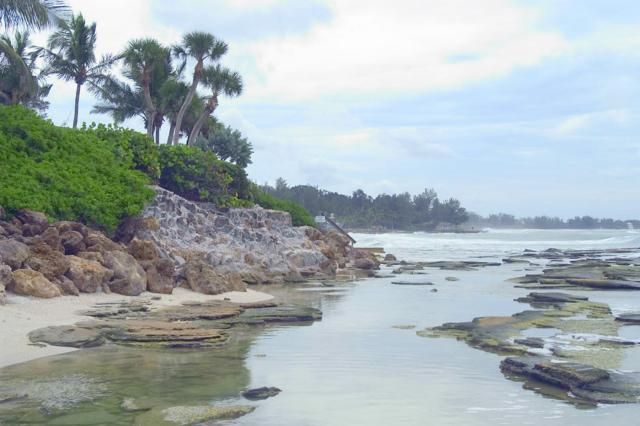 6 Fun Things to Do on Siesta Key with Kids: Spy Dolphins and More @ Point of Rocks Sarasota, Florida.