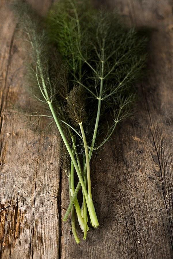 Bronze Fennel - Pinetree Garden Seeds - Herbs - 1