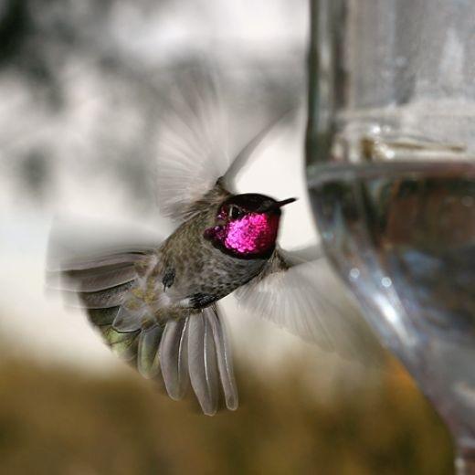 Best Hummingbirds Images On Pinterest Humming Birds Flowers - Photographer captures amazing close up photos of hummingbirds iridescent feathers