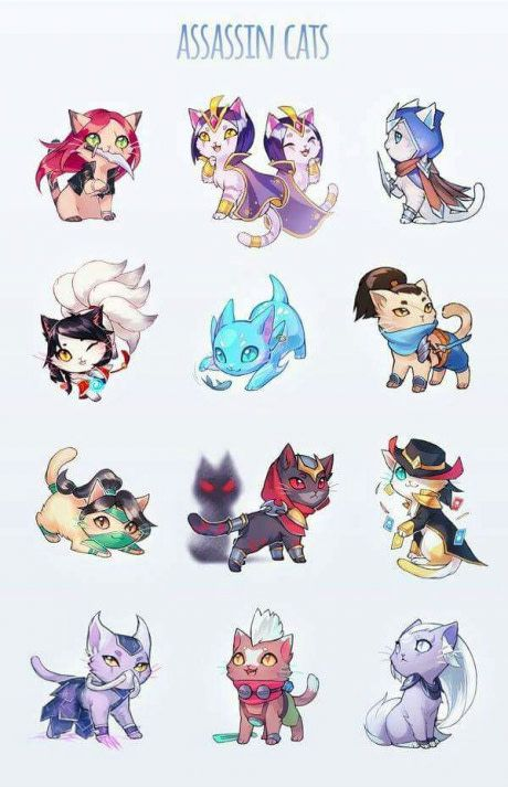 Here is the assassin cats :3