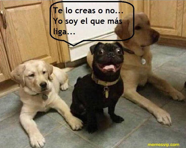 Me duele la cara de ser tan guapo - It hurts my face to be so handsome  #chistes #meme #memes #momos #español #memesvip #memesvipcom #chiste #corto #humor #2018 #madrid #barcelona #california #losangeles #LA #mexico #argentina #chicago #sevilla #valencia #newyork #NYC #venezuela #colombia #houston #trending #guapo #beautiful