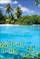 Tropical Scenery II | Scenic | Hardboards | Wall Decor | Plaquemount | Blockmount | Art | Pictures Frames and More | Winnipeg | MB | Canada