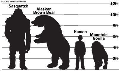 Bigfoot Facts   Is Bigfoot Real