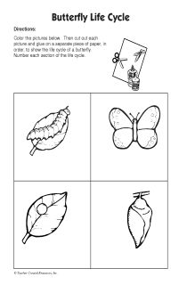life cycle of a butterfly coloring page - 52 best images about butterflies on pinterest the bug