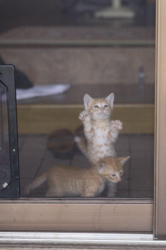 -----,_,--------------------------------------------=('ᴥ')=---------GATTI/CATS-------------ฅ(_ฅ)ᘚ--------by-ⓛⓤⓐⓝⓐ---------