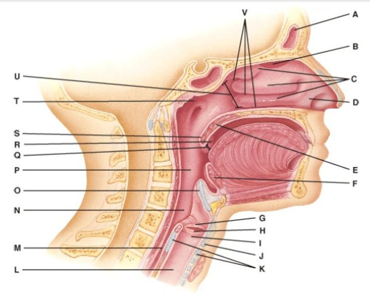 108 best biology diagrams images on pinterest ap biology biology google biology diagram google search ccuart Images