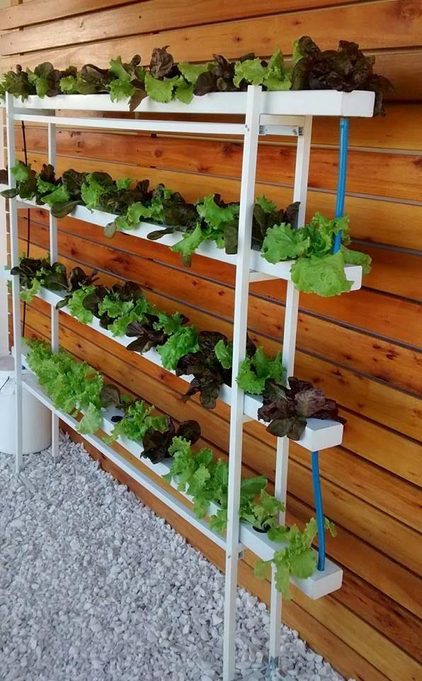 Combos de cultivo HIDROPONIA Jardinería hidropónica