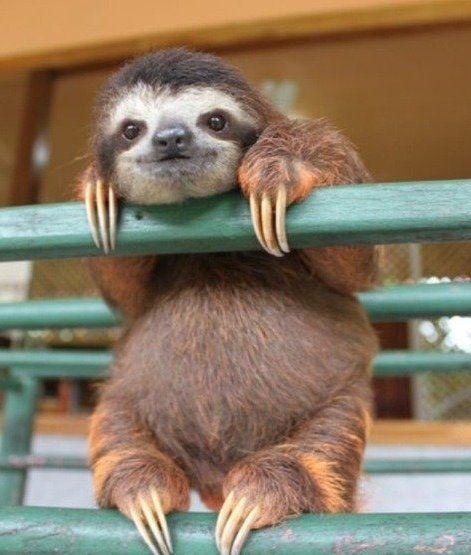 Hello! #animais #fofo #tumblr
