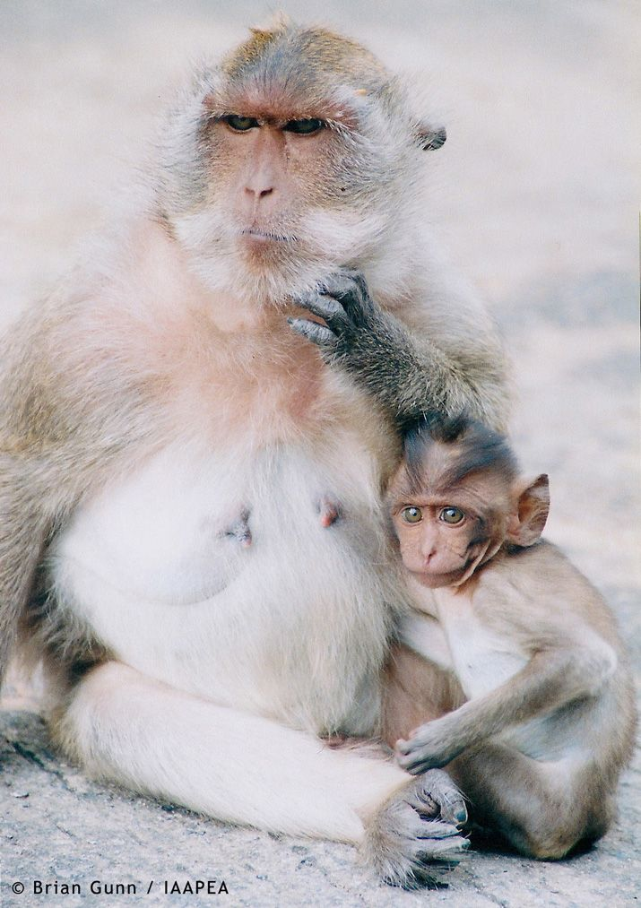 Macaque And Baby Picture Animal Testing Pros and Cons – Facts, Figures, Legislation And Statistics