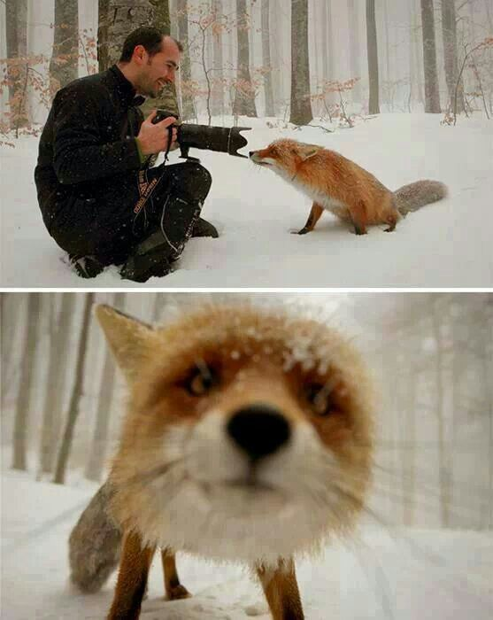 """What does the fox say?   """"Take me home with you!""""   Dawwww how did he get so lucky??? :)"""