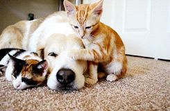 cat dog animals cute puppy friends cats kitten puppies kittens dogs cute animals cute baby animals baby animals
