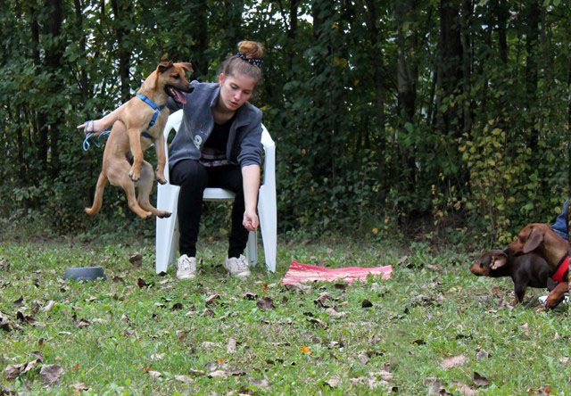 Mia and Miley: what on EARTH is that dog doing???!!!! / Mia e Miley: ma che FA quel cane????!!! :)