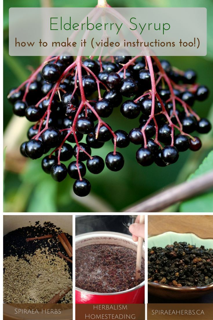 How to Make Elderberry Syrup - including video instructions   Spiraea Herbs