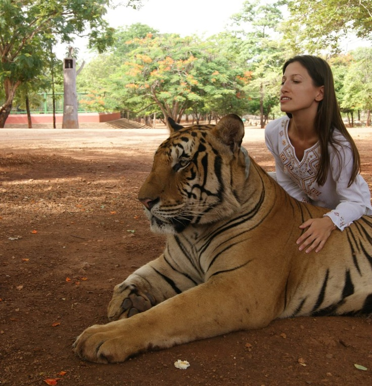 Thailand. Tiger Temple.  Can I please cuddle with a tiger? They're so beautiful!