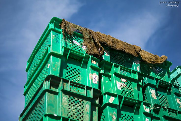 Crates filled with different types of vegetables ready to be sold at Ta' Qali Farmers' Market