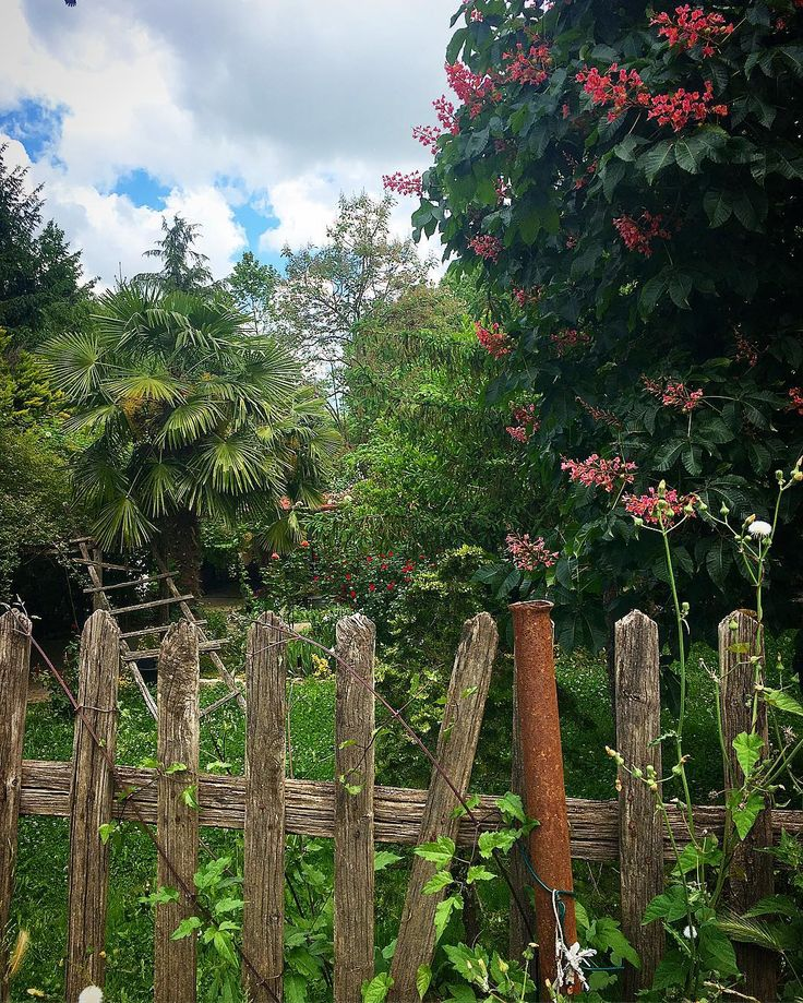 #garden#gardenlove #bahçekeyfi#bahçe#çiçekler #flowerslovers #flowerstagram #flowersoftheday #istanbul#polonezköy#istanbuldayaşam http://gelinshop.com/ipost/1520980607293908783/?code=BUbm83IAucv
