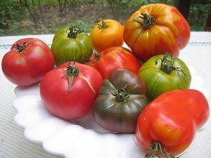 tomates-jardin