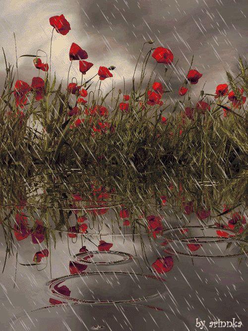 Дорожными знаками, природа дождь картинка анимация