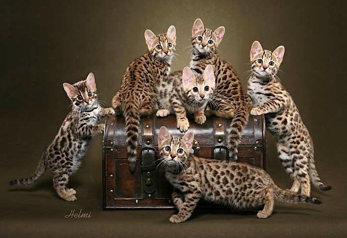 les plus beaux chats du monde - kdepak, nejkrásnější coby rasa jsou klasické české mouratky!