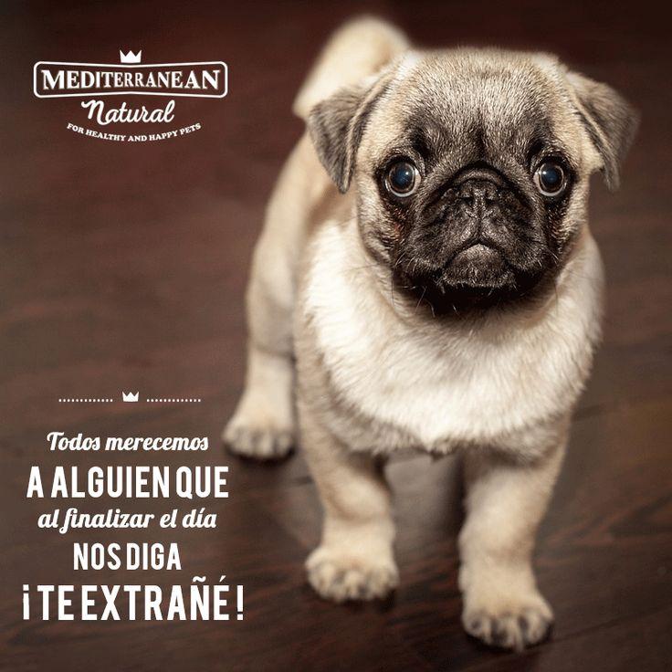 Nada hay más gratificante cuando llegas a casa 💛 / Mediterranean Natural / perros / frases / quotes / citas / Pug