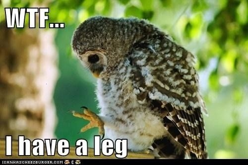 Who Knew?Cute Animal, Laugh, Funny Pictures, Baby Owls, Funny Stuff, Legs, Owls Baby, Birds, Who Knew