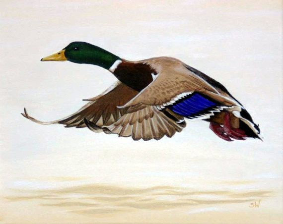 realism in the wild duck Social and cultural context in the wild duck styles and themes in 1884-romanticism-social realism-gained prominence -social hierarchy -morals of family life and propriety.
