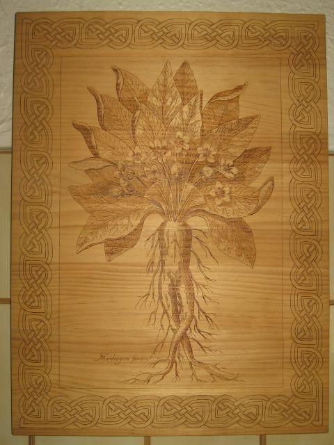 https://flic.kr/p/8M9GBT | Mandrágora | Cuadro Mandrágora pirograbado a mano. Madera de pino. Dibujo basado en un antiguo grabado.