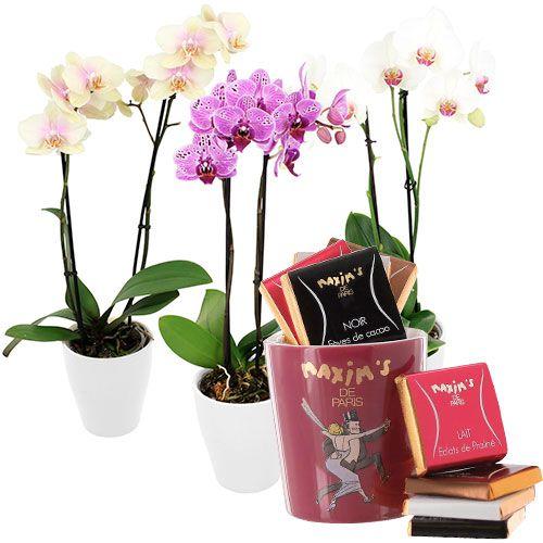 1000 id es sur le th me fleurs tropicales sur pinterest - Peut on couper les racines des orchidees ...