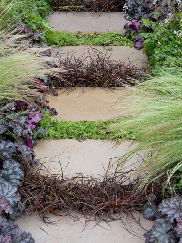 259 Best Groundcover Ideas Images On Pinterest Backyard