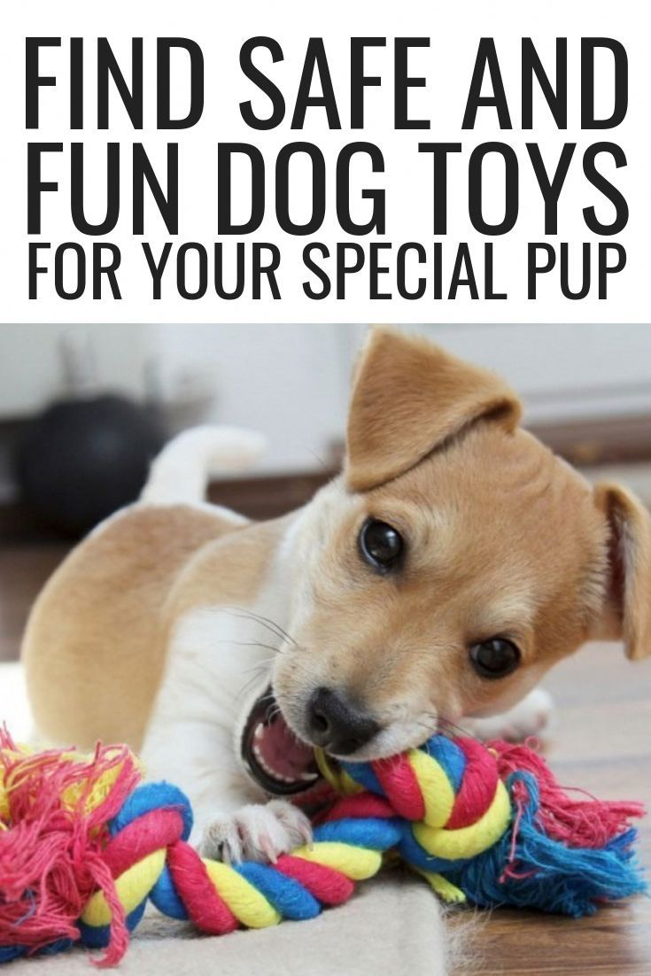 Find Safe And Fun Dog Toys For Your Special Pup Pet Pets Cat