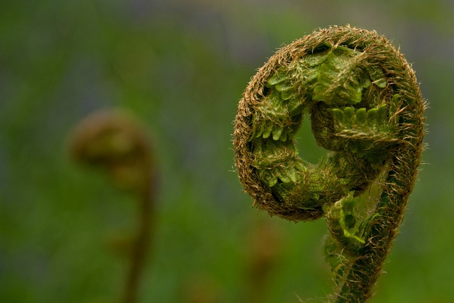 Finely Divided by Deb Maidment at Nature Versus Photography #frond #spring