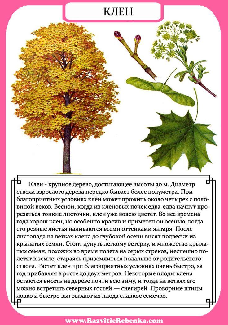 их деревья в картинках описание и