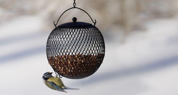 nelson garden linnunruokinta - Sök på Google