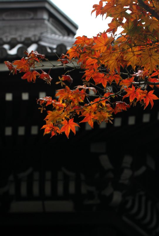 Kyoto, Japan 六角堂 (Photo : Gallery I) https://www.facebook.com/Kyoto.GalleryI