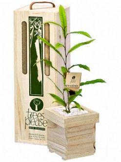 Flowering Tree Gifts Rewarewa (NZ Honeysuckle) Tree Gift