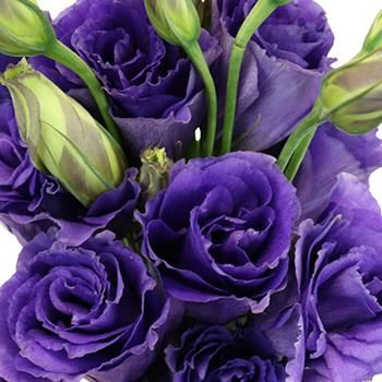 Get purple lisianthus at FiftyFlowers.com. This rich Hues of Purple Lisianthus Flower is abundant in petals, and is ideal for adding a textural element to your bouquets. With soft to intense shades of purple, this unique rosette flower is the perfect touch to add in with creamy white garden roses, stock, and amaranthus for a gorgeous textured look. Lavender Roses, Purple Flowers, White Flowers, Lisianthus Flowers, Anemone Flower, Purple Garden, Colorful Garden, Types Of Flowers, Large Flowers