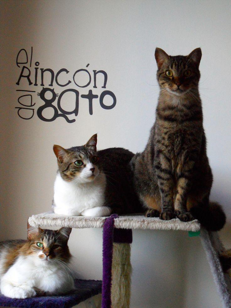 Diseño  de un ambiente único para tu mascota... porque hacen parte de tu familia! En Bogotá tel. 3176746222 - 6087286 contactanos@gfdecoraciones.com