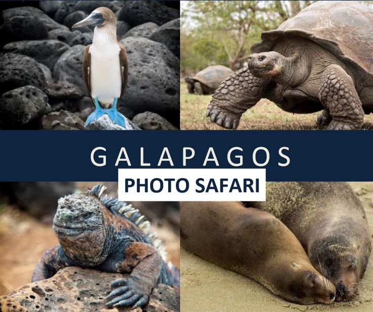 9 Day / 5 Islands Land Expedition in Galapagos with professional photographer, Ron Modra, and professional music start Ronnie Dunn!