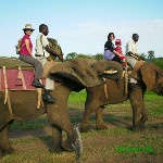 All aboard for our elephant safari