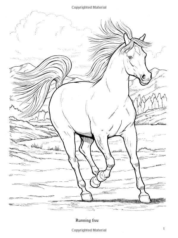 Coloriage De Poulain Elegant 58 Best Coloriage Chevaux Images On Pinterest  | Coloriage Today | Coloriage cheval, Coloriage animaux, Coloriage