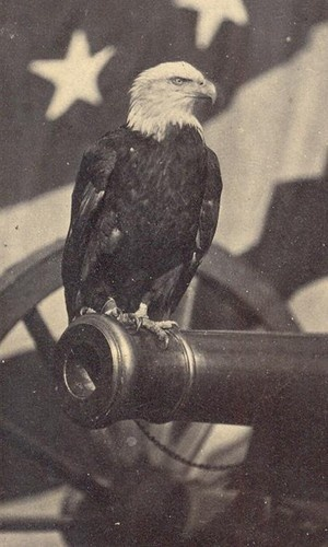 'MURICA Old Abe, the American War Eagle, was the mascot of the 8th Wisconsin Regiment in the Civil War. Old Abe was in thirty-nine battles during the Civil War including Fredericktown, and the Siege of Vicksburg. Old Abe was not just a mascot, but became a patriotic symbol for the entire nation.