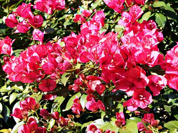 Blossom season.