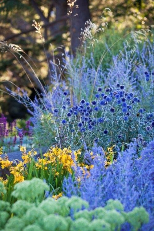 So ethereal ...  Lovely photo from Casa Jacaranda on tumblr.  Looks like some Russian Sage, with perhaps some yellow Campsis flowers?  Such a beautiful layout ...