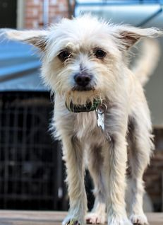 Meet Your New Best Friend Adopt Dusty The Amazing We