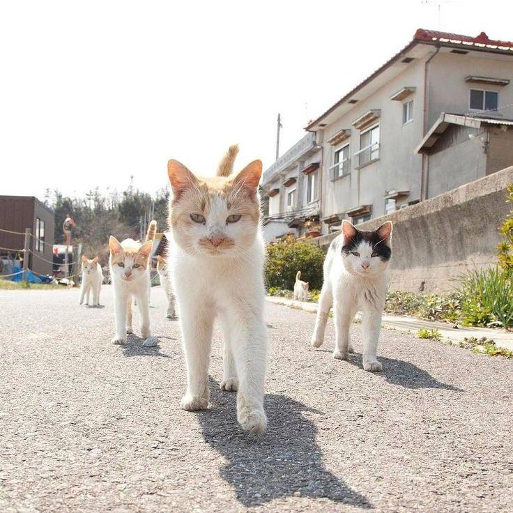 #Cats #Cat #Kittens #Kitten #Kitty #Pets #Pet #Meow #Moe #CuteCats #CuteCat #CuteKittens #CuteKitten #MeowMoe The gang ... https://www.meowmoe.com/43481/