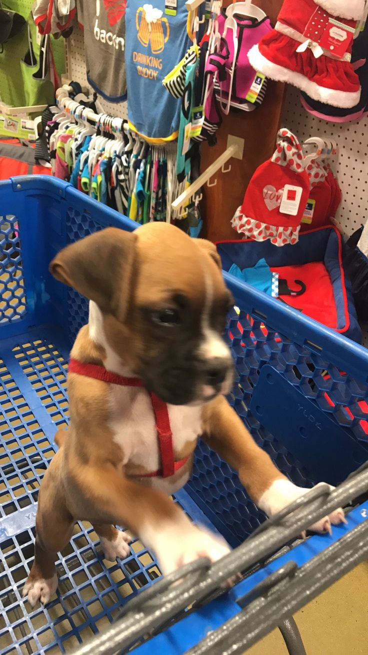 #boxer #shopping of course that one mommyy