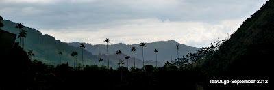 Colombia, on the way - De paso : Cocora Valley-Quindio Colombia